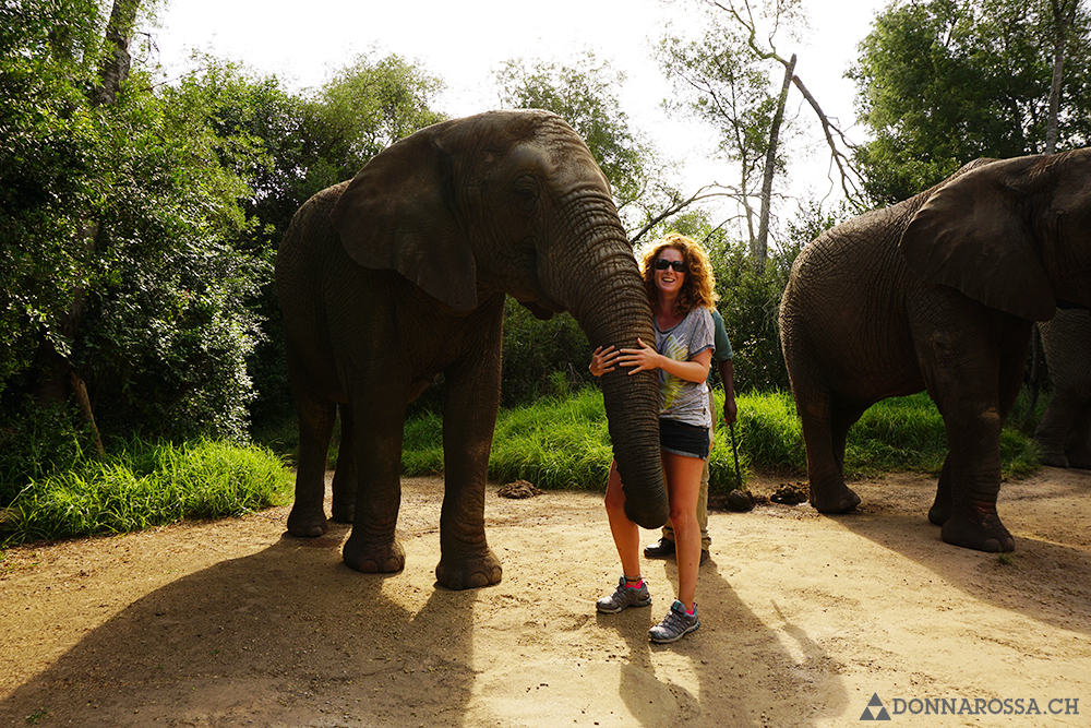 south africa plettenberg elephant sanctuary trunk touch