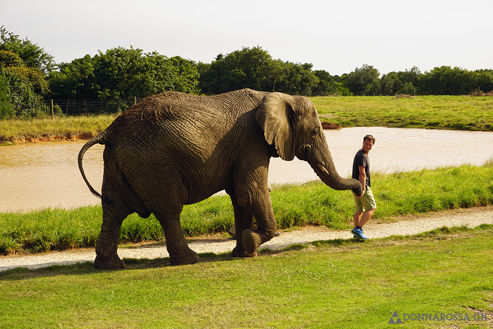 south africa plettenberg bay elephant sanctuary trunk hand walking