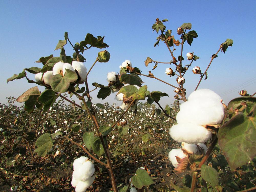 Baumwolle Fasereigenschaften