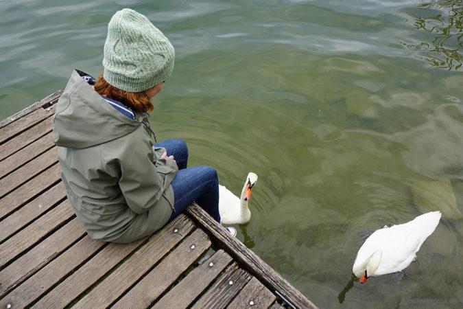 Stradbally hat pattern with swans mütze strickanleitung